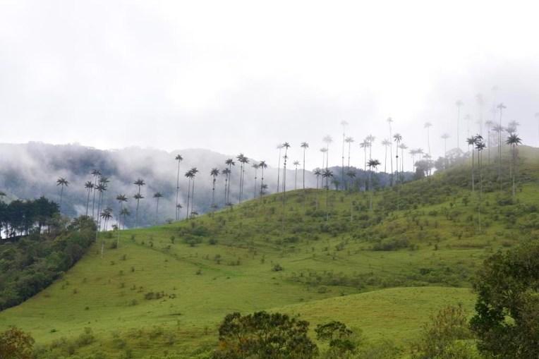 Valle de Cocora, perto de Salento