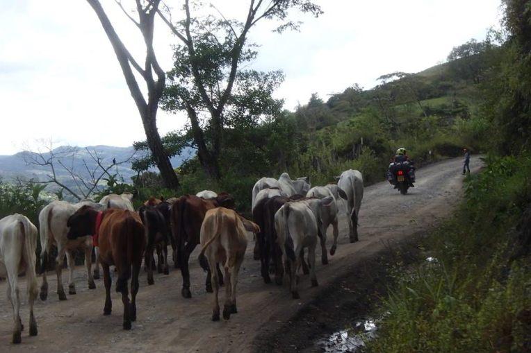 Estrada para Guadalupe