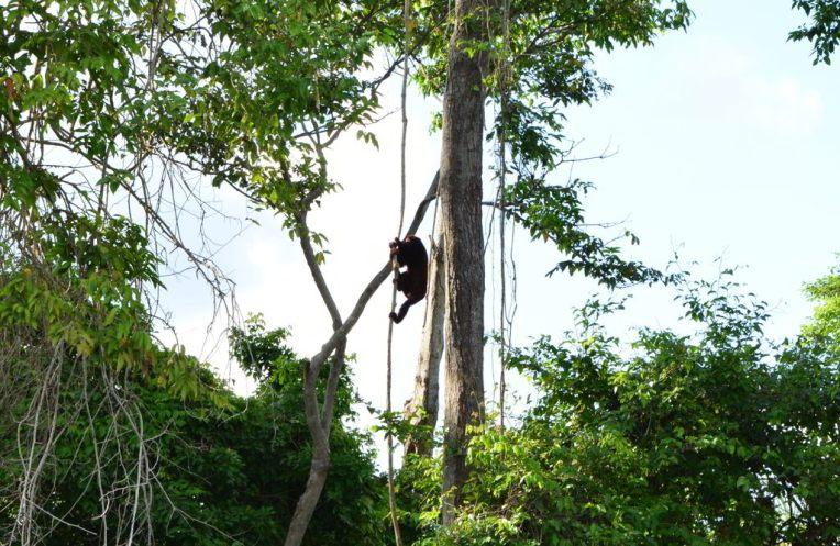 Um dos inúmeros macacos que vimos no caminho até o Maracaibo