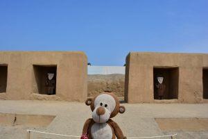 Mucuvinha nas ruínas de Chan Chan