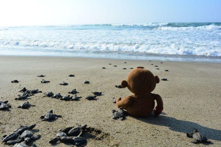 Tartarugas em Playa Azul, México