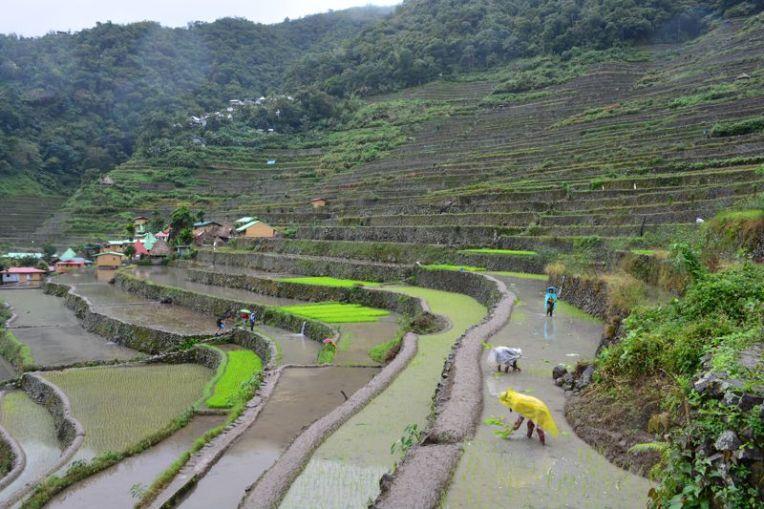 Plantação de arroz em Batad, Filipinas