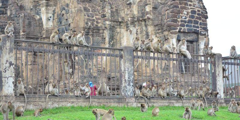 Templo dos macacos em Lop Buri