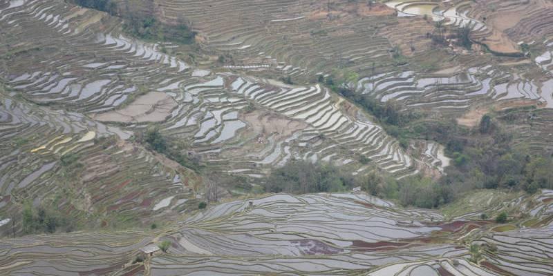 Terraças de arroz de Bada