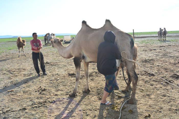 Mochilando no Deserto de Gobi