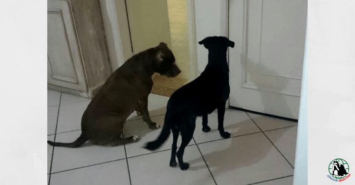 Como deixar seu cão menos ansioso na hora da despedida