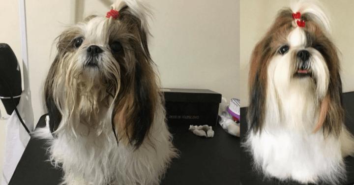 Como limpar os bigodes do cachorro