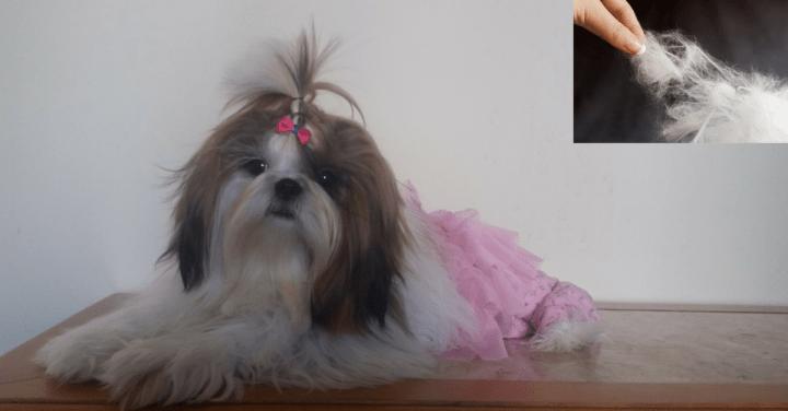 O que fazer para o pelo do cachorro não embolar