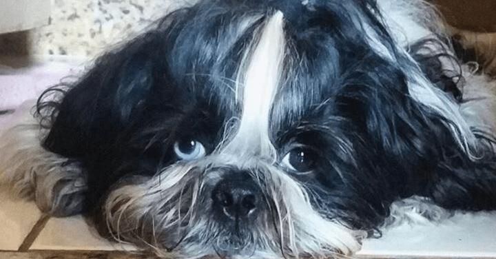 Como lidar com um cachorro medroso?
