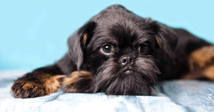 Causas do vomito e diarreia em cães