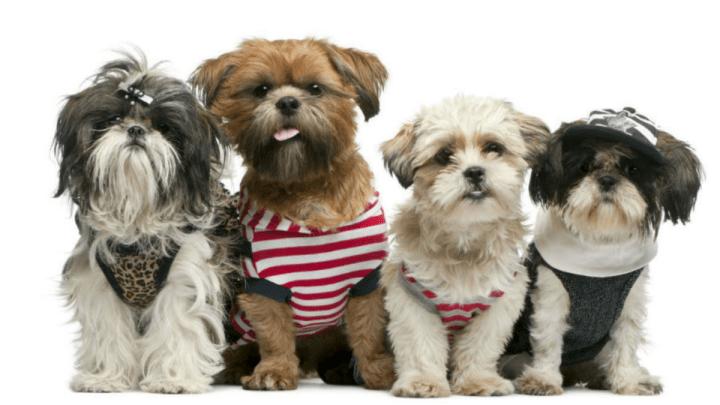 10 fatos que talvez você não saiba sobre os cães