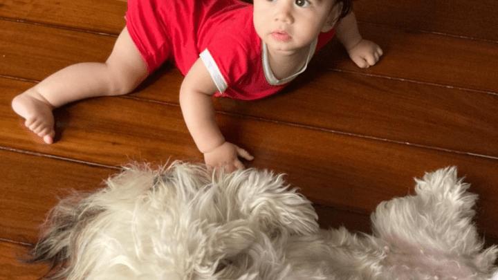 O Shih Tzu se dá bem com crianças?