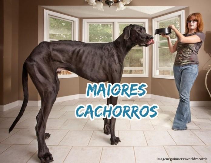 Top 10 maiores cachorros do mundo (raças gigantes)