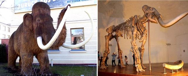 Top 10 animais incríveis que já foram extintos - Mamute