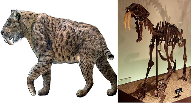Top 10 animais incríveis que já foram extintos - Tigre-Dentes-de-Sabre