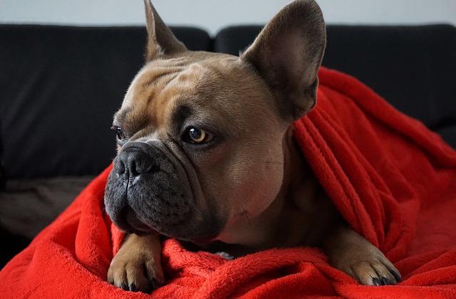 barulho da chuva cachorro