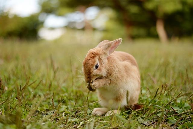 Fatos interessantes - coelhosnão são roedores