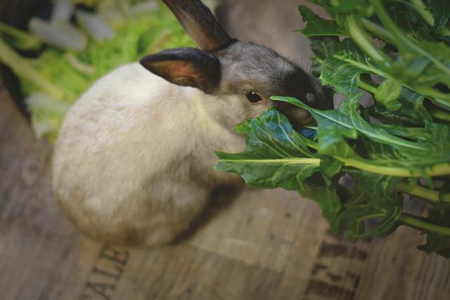 coelhos são vegetarianos