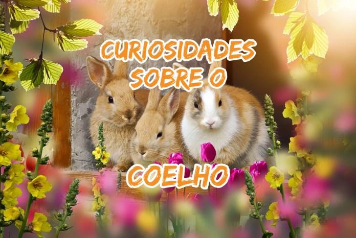 Top 10 curiosidades sobre o Coelho