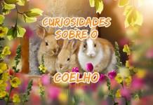 Curiosidades sobre o coelho