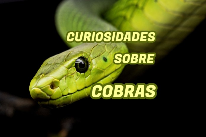 Top 10 curiosidades sobre Cobras