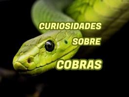 Curiosidades sobre Cobras