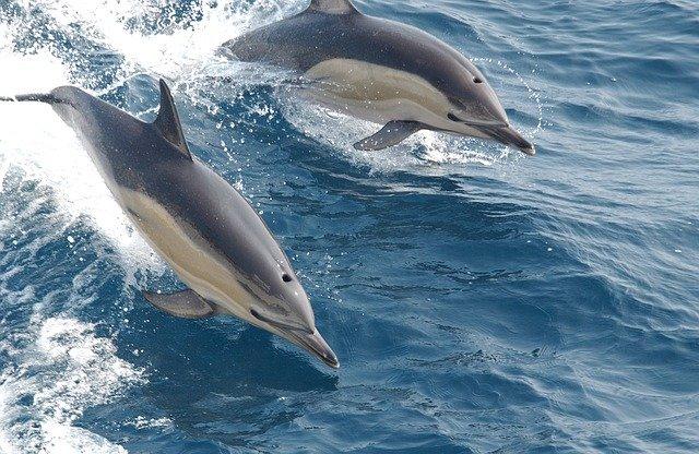 Animais marinhos ou que vivem em rios que podem se afogar