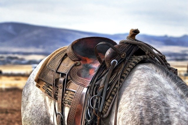 """Domesticação """"recente"""" dos cavalos"""