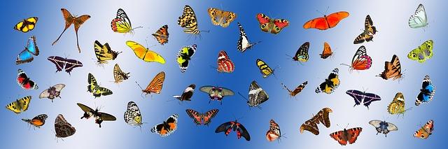 Espécies de borboletas que não acabam mais