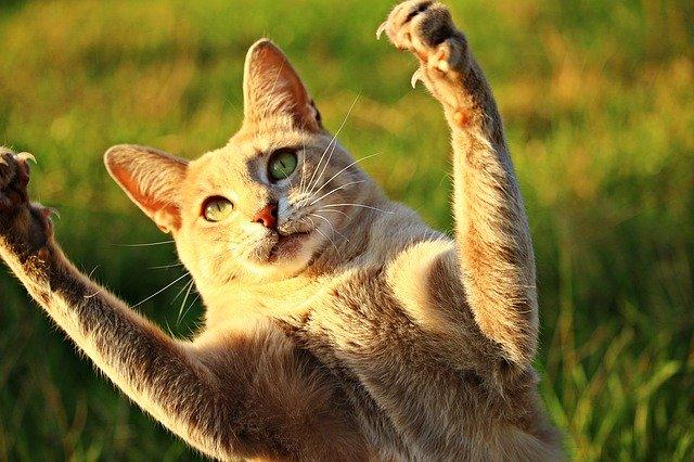 Gatos são exímios caçadores