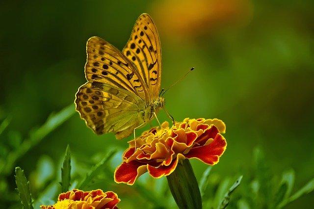 Visão da borboleta além do alcance