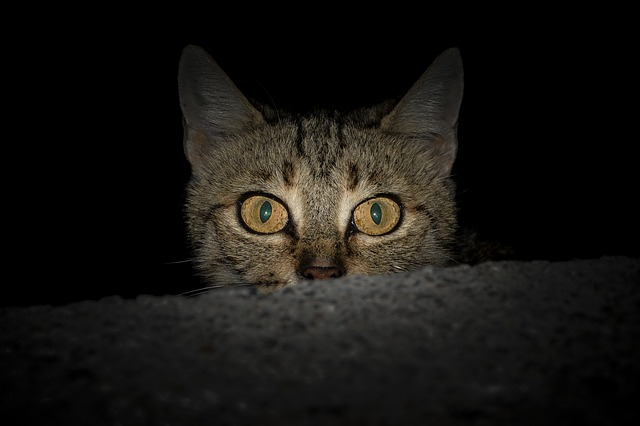Visão noturna privilegiada dos gatos