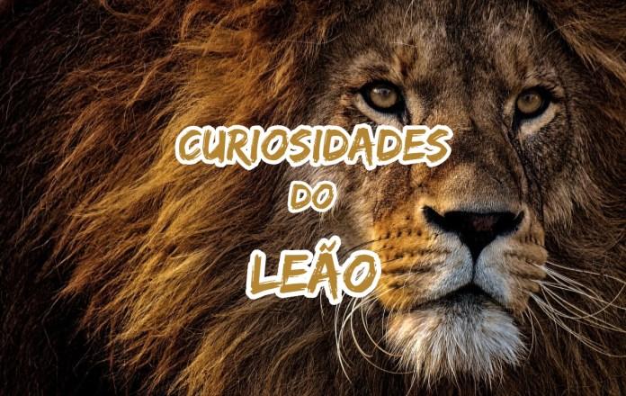 Top 10 curiosidades sobre o Leão