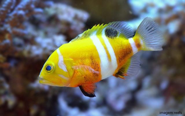 Peixes mais caros do mundo - Neptune Grouper
