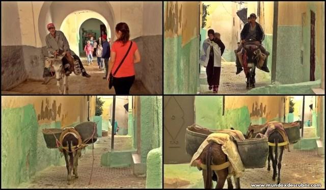 Collage burros