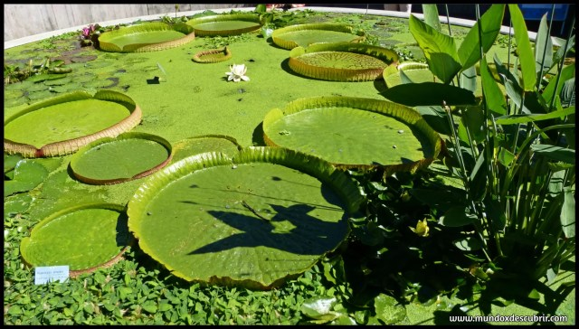 Jardín Botánico Zurich
