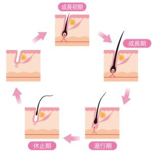 毛周期:ムダ毛の脱毛に知っておきたい知識