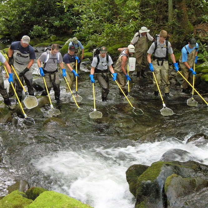 Fisheries Students Assist in National Park Service Project