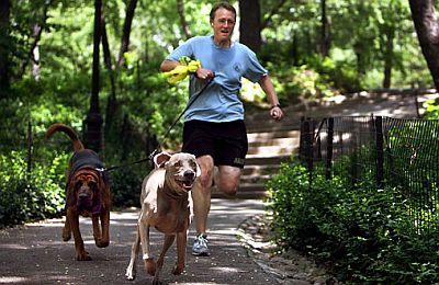 running-at-park-with-dogs-at-park.jpg