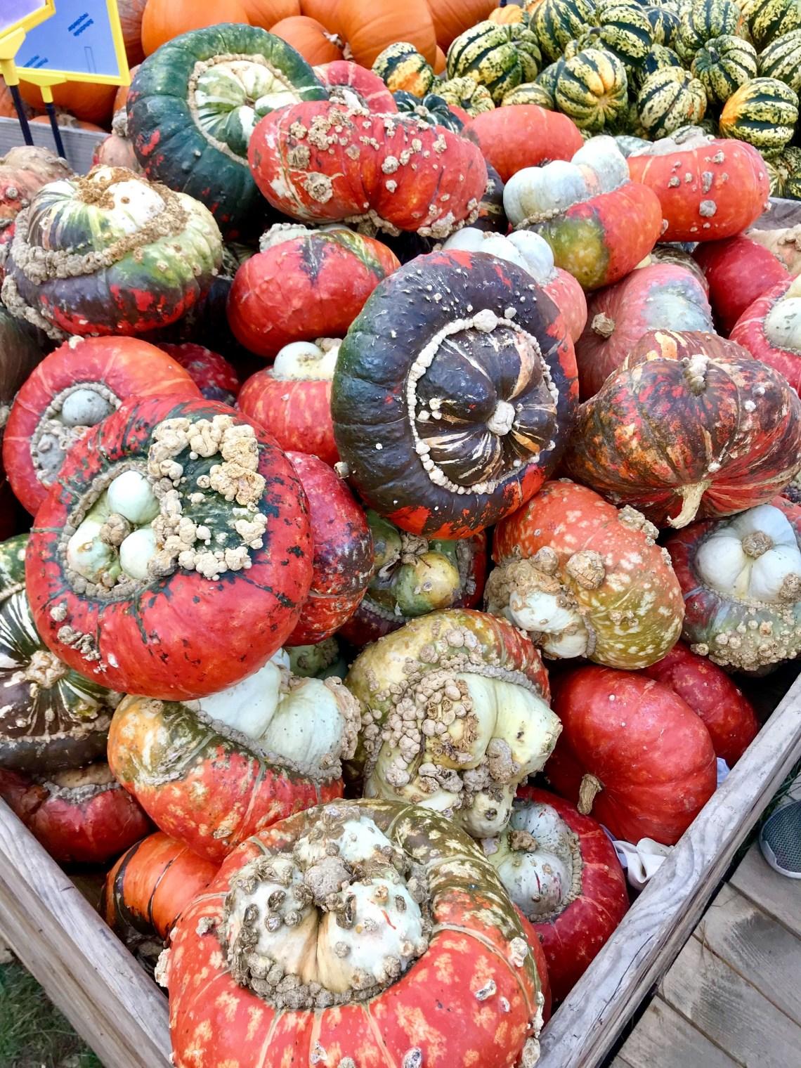 Ludwigsburg Pumpkin Festival_0245