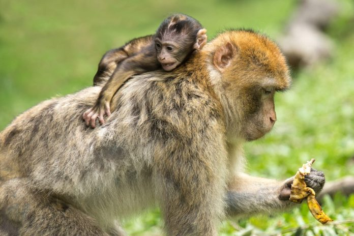A monkey on your back