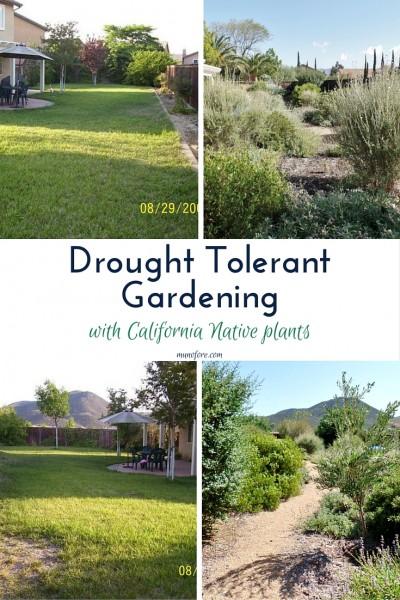 Drought Tolerant Gardening(2)