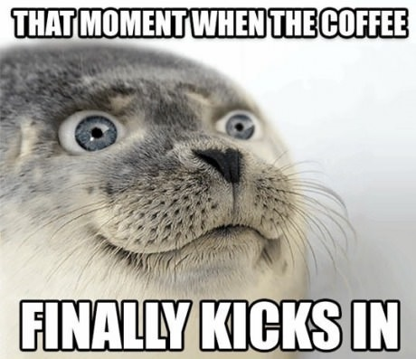 seal-meme-coffee-eyes