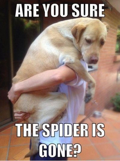 Funniest_Memes_are you sure the spider is gone_13715?resize=400%2C535 funny animals more afraid of spiders than you are fridayfrivolity