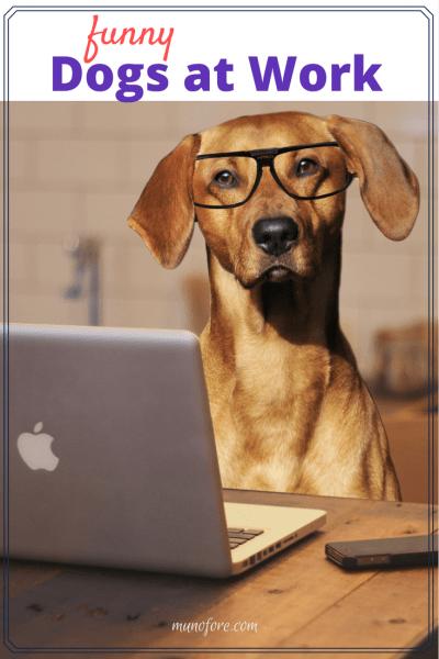 funny working dog memes