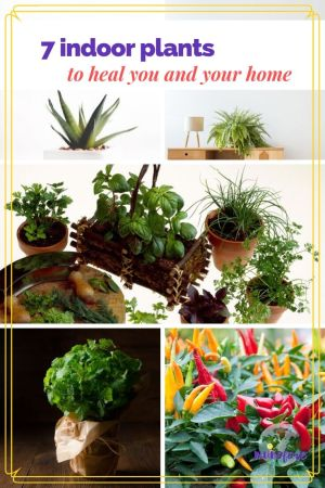 Adding indoor plants to your environment can reduce toxins and increase fresh air and create tranquility. These plants also provide added health benefits for you. #indoorplants #healthyplants #healingplants #medicinalplants #indoorgardening #muoforeblog
