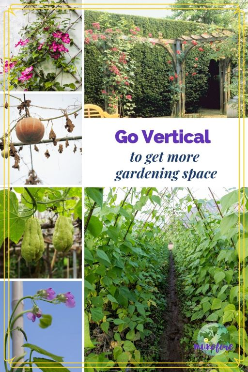 collage of plants growing vertically