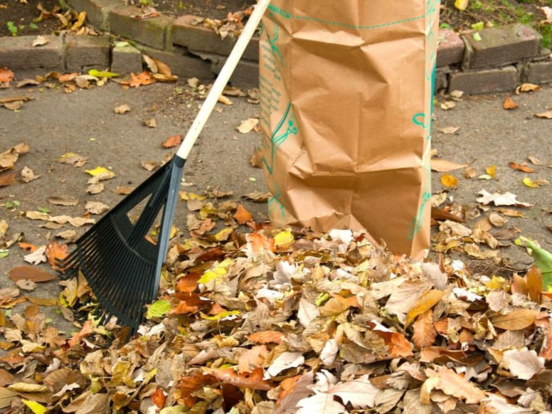 leaves being raked with a brown bag nearby