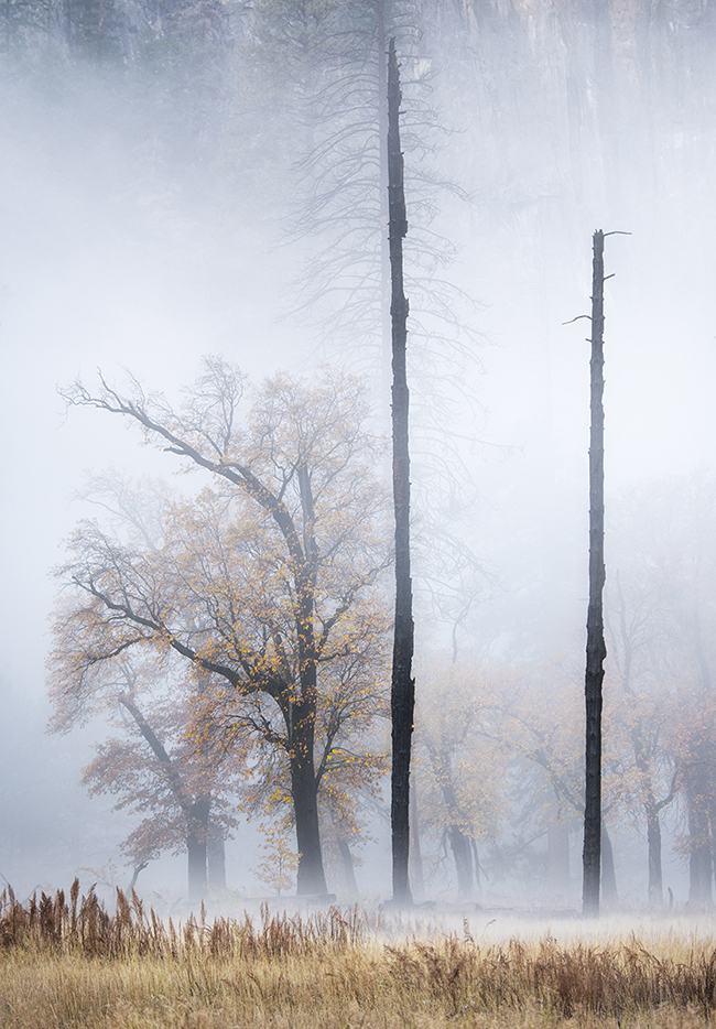 Photograph of trees in a Yosemite meadow obscured by morning fog.