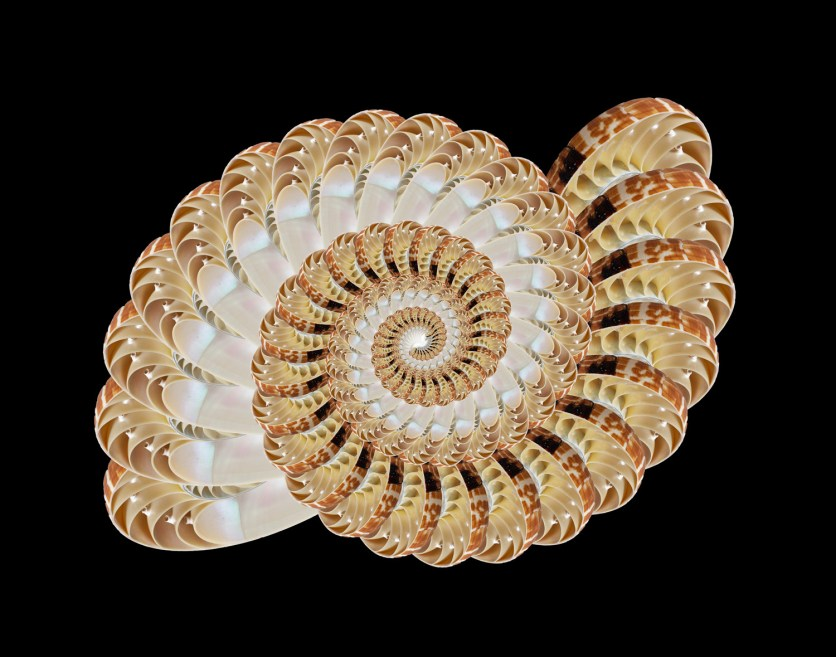 Youngs D Nautilus Fractal 1